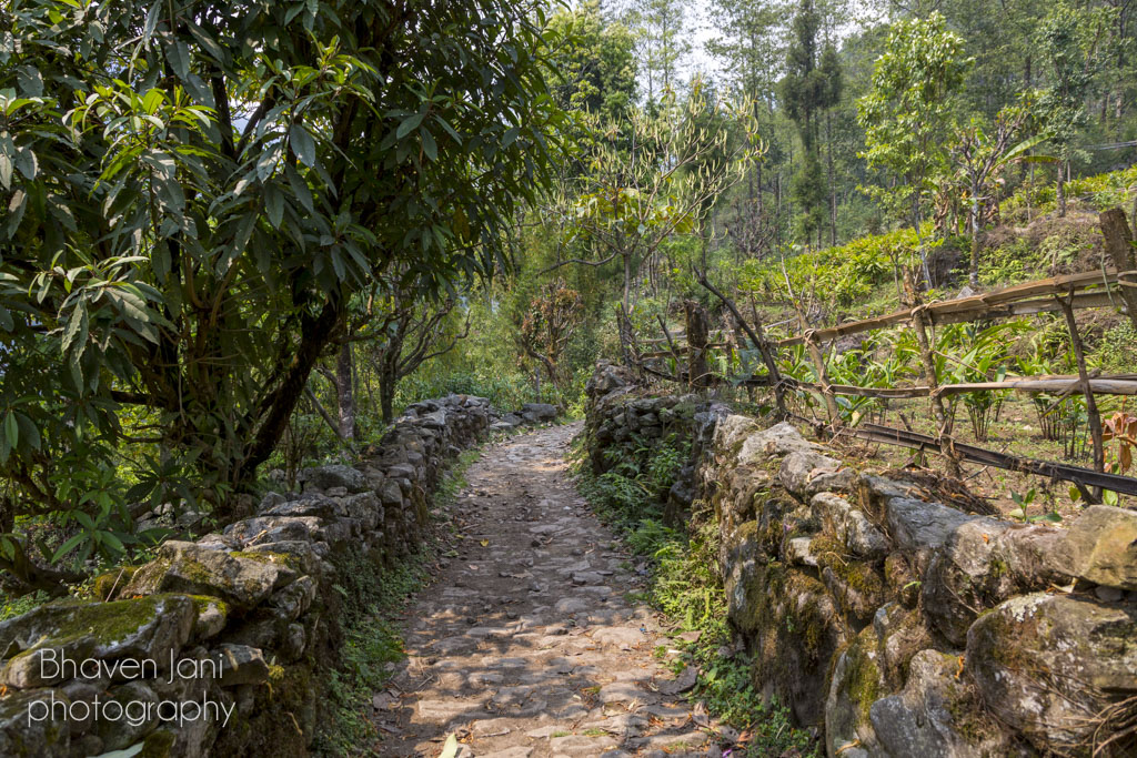 Trekking trail to GoechaLa in Sikkim